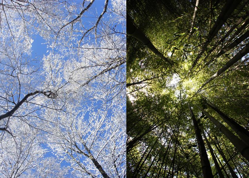 Diptyque – D'arbre en arbre